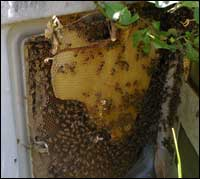 swarm in an electricity box
