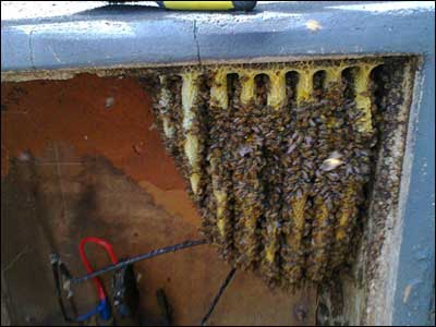 new hive in an electricity box