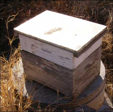 managed bee hive